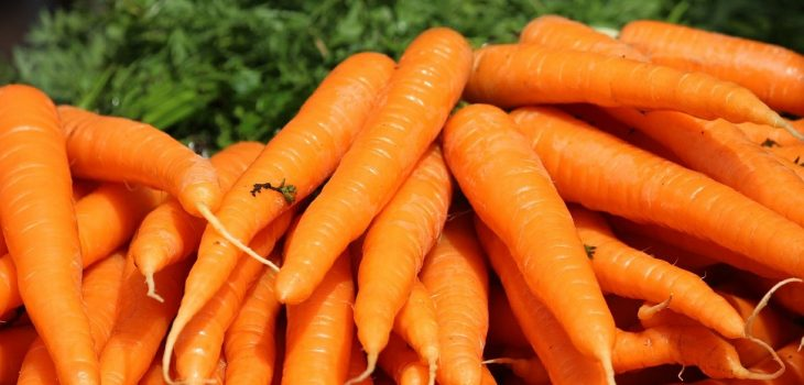 Can Cats Eat Carrots? Benefits and Precautions