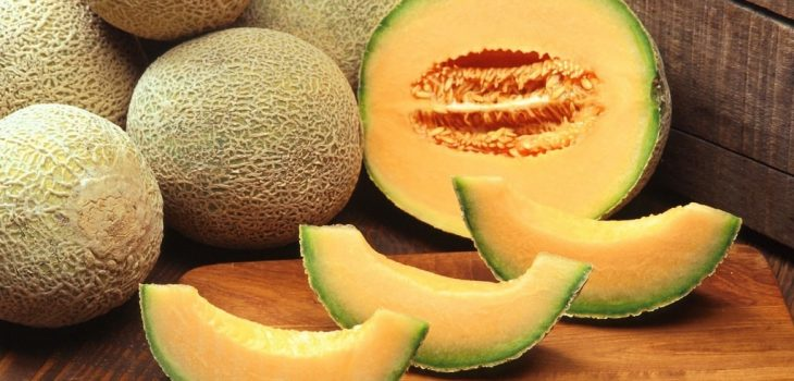 Can Cats Eat Honeydew? Does it Have Real Benefits?
