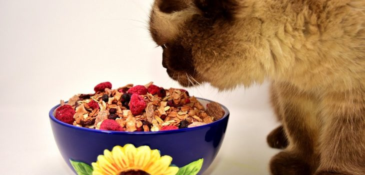 Can Cats Eat Oatmeal? 5 Benefits You Should Know