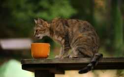 Can Cats Eat White Rice? Is It Safe?