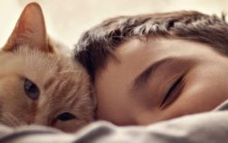 Why Does My Cat Sleep With Me And Not My Husband?