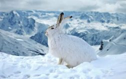 What Do Rabbits Eat In The Winter