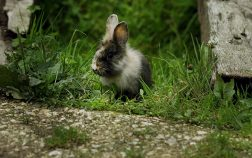 How To Get Rid Of Fleas On Rabbits