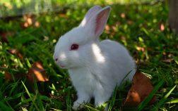 How Many Nipples Do Rabbits Have