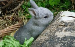 Why Do Rabbits Eat Their Poop