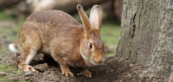 what is the best bedding for rabbits