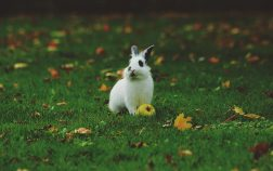 When Are Rabbits Most Active