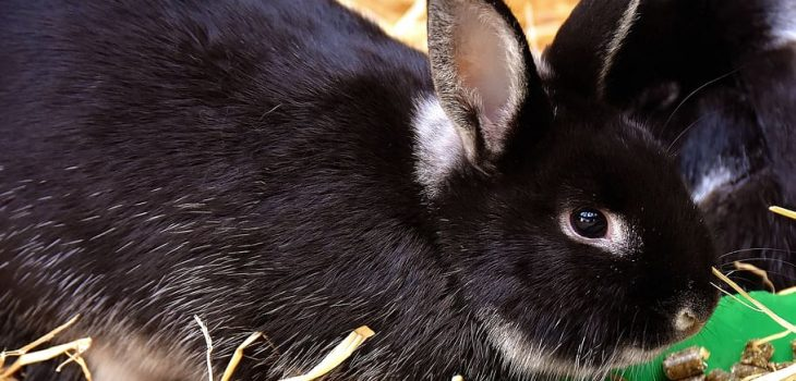 What can rabbits chew on