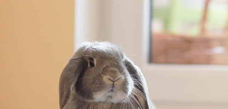 Do Rabbits Eat Scallions