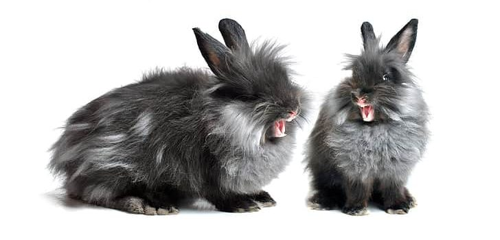 Do Rabbits Eat Pineapple