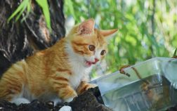 How To Calm A Hyper Cat: 5 Effective Ways