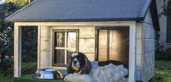 How To Heat A Dog House Without Electricity? 10 Effective Solutions