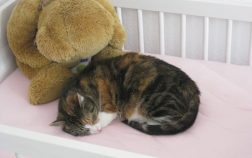 How To Keep The Cat Out Of Crib: 5 Steps to Take