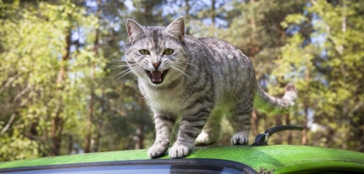 Why Does My Cat Attack Me And No One Else? 6 Potential Reasons