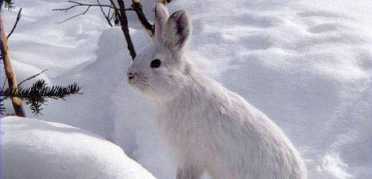 where do rabbits go in the winter
