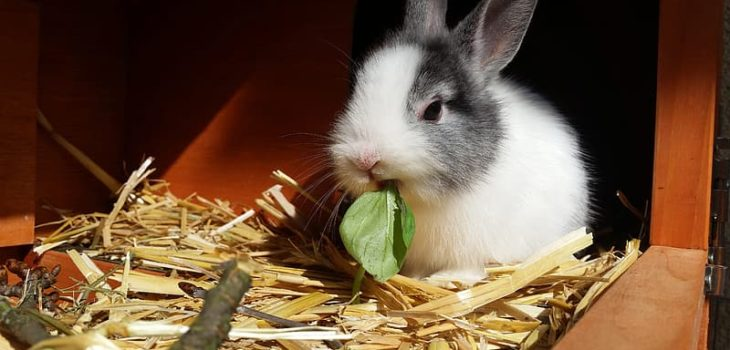How often should you change a rabbit's bedding