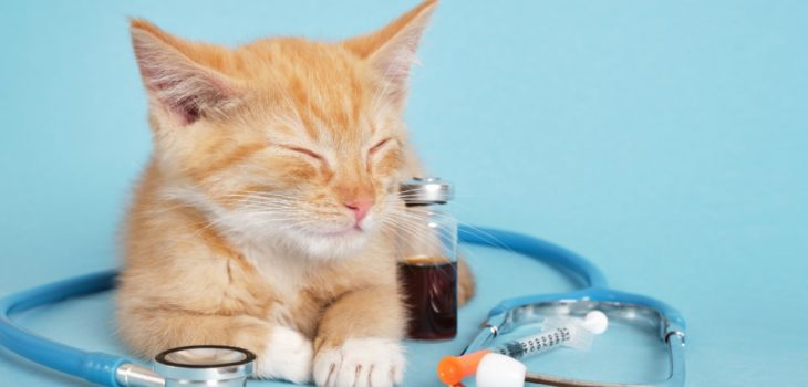 How Long Can A Diabetic Cat Go Without Insulin
