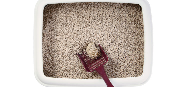 How To Dispose Of Cat Litter Without Plastic Bags