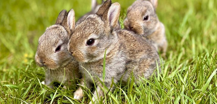 How to breed rabbits in the forest