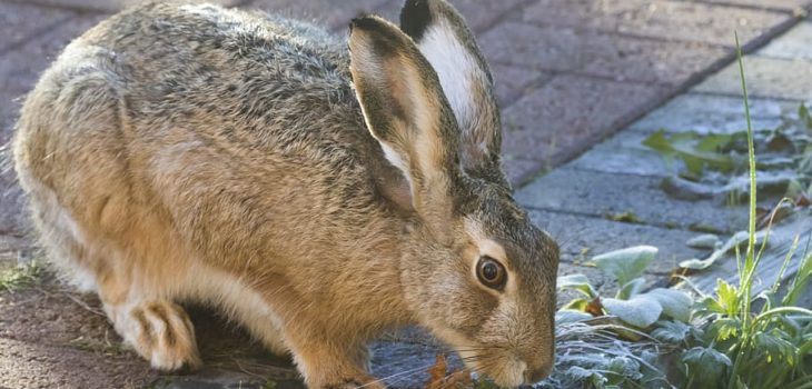 What can rabbits drink
