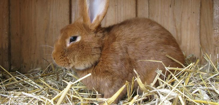 how to make a rabbit bed