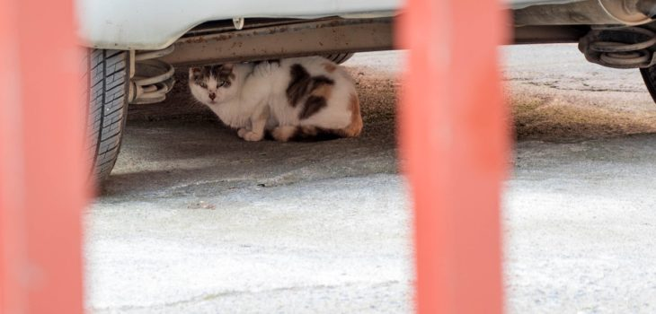 how to get a cat out from under a car