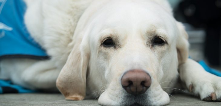 how to keep a dog inactive during heartworm treatment