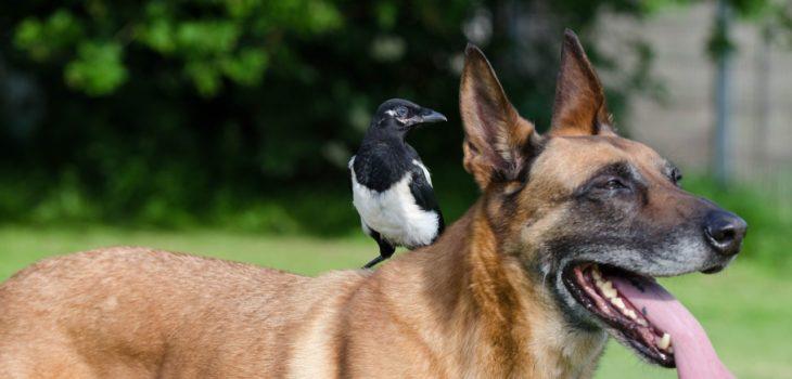 what happens if a dog eats a bird