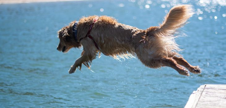 where can i take my dog to swim