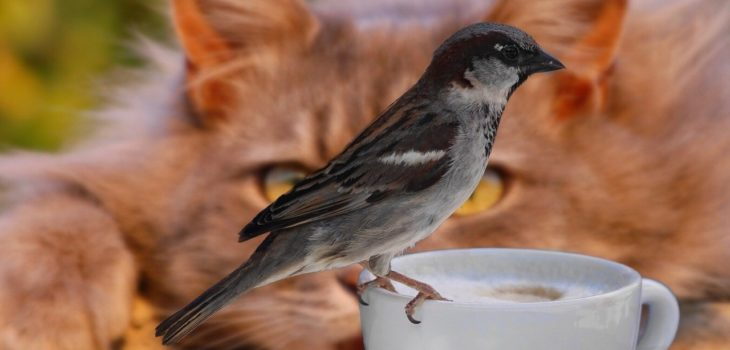 how to keep birds from eating cat food