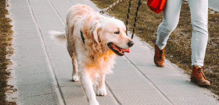 how often should you let your dog out