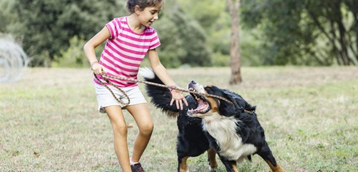 Child dog bite proveked
