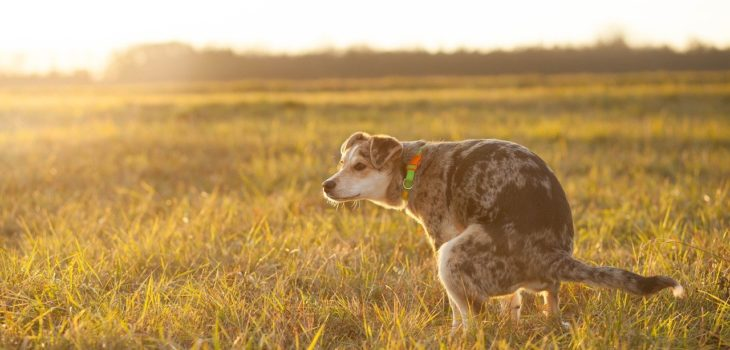 can cbd help dogs with diarrhea