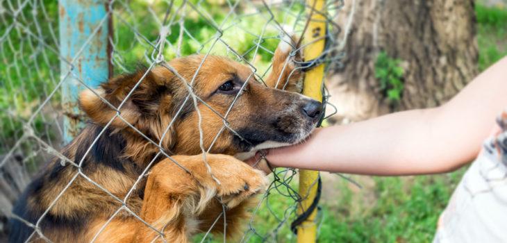 dog bite through fence liability