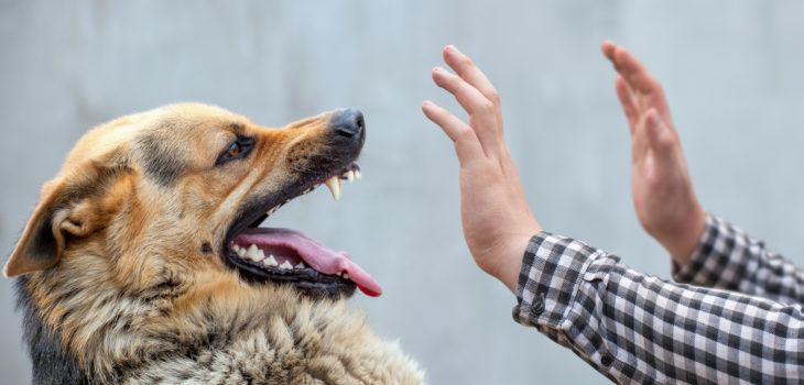 """What is """"Dog Fright"""" and Liability for Yappy Injuries"""