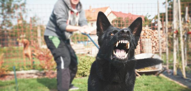 landlord dog bite liability