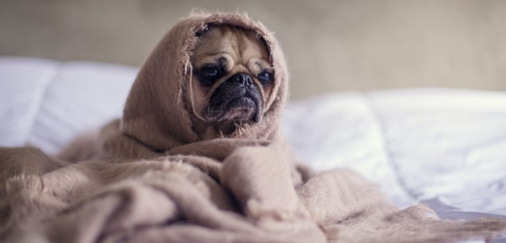 how to cure dog anxiety