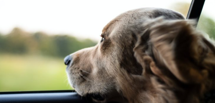 how to help dogs with car sickness