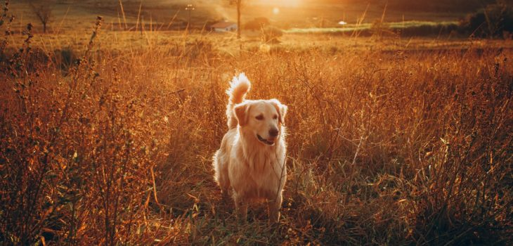 What Is The Best Wireless Fence For Dogs