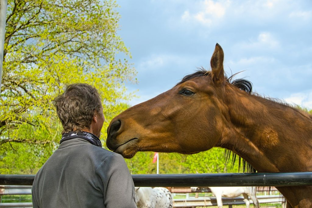 horse is sniffing a man