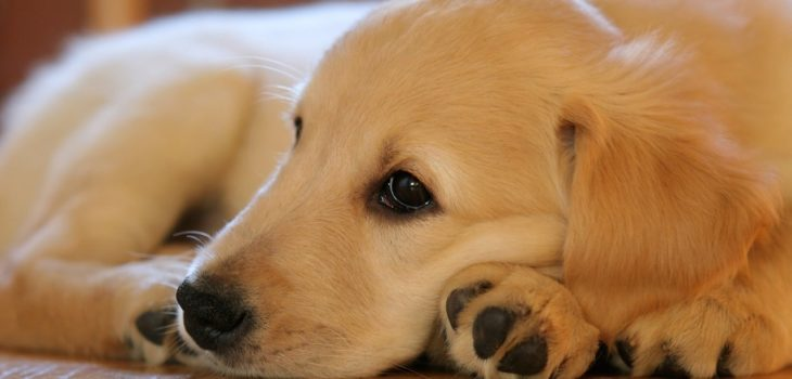 what to do if your dog eats gum