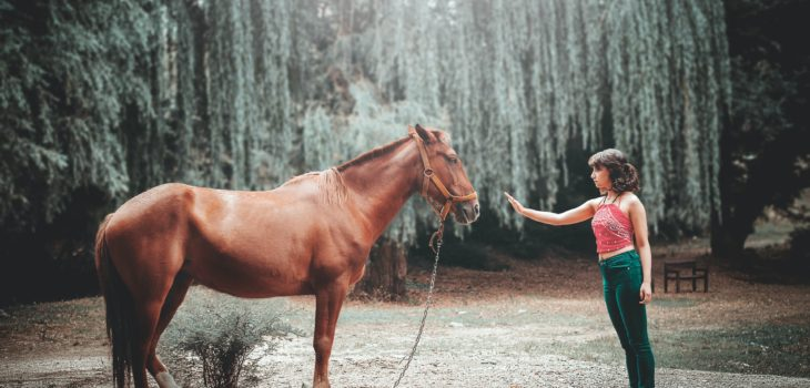 How to Bond with a Horse