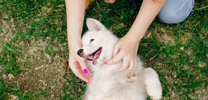 Are Doggie Play Bites Lawsuits Waiting To Happen