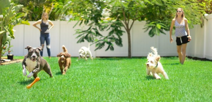 best electric dog fence