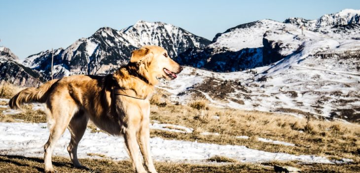 best wireless dog fence for hills