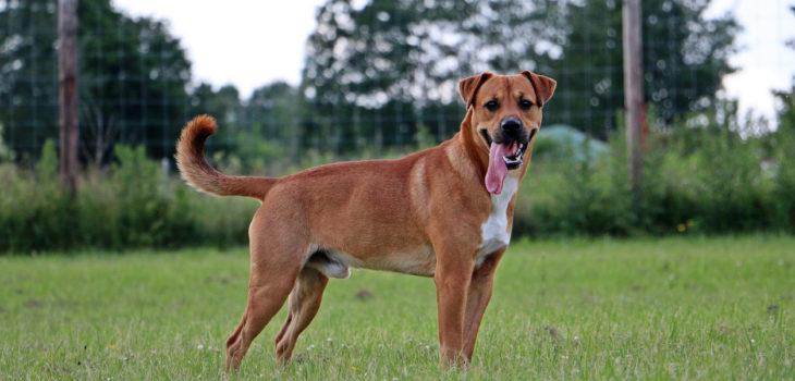 Best Wireless Dog Fence Systems