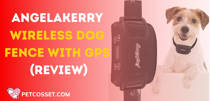AngelaKerry Wireless Dog Fence with GPS (Review)