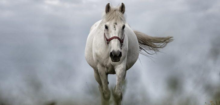 Can horses eat eggs