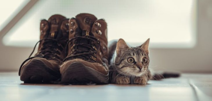 how to get cat urine out of shoes