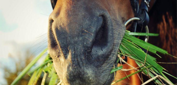 timothy pellets vs alfalfa pellets